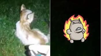 殘忍!幼貓全身起火遭虐殺 動保團體懸賞揪冷血凶手