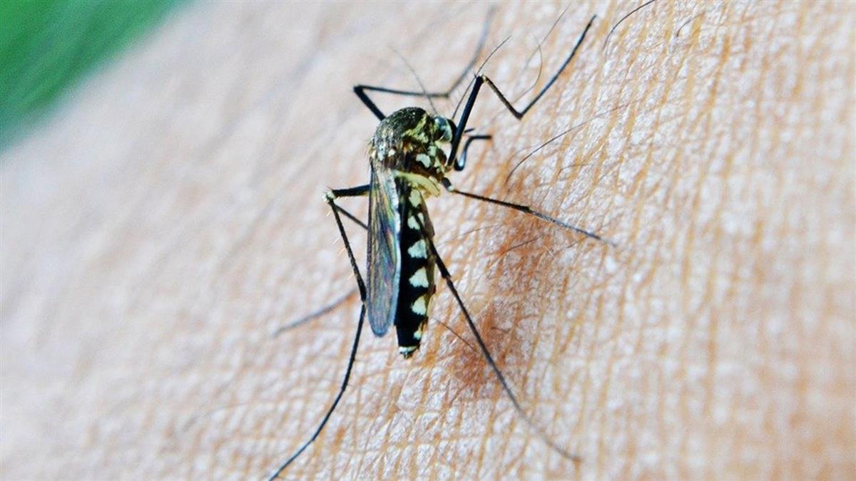 今年首例本土登革熱!桃園男發燒起紅疹 四度就醫才確診