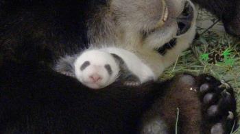 「圓仔妹」重回媽媽懷抱 母女熟睡畫面曝光