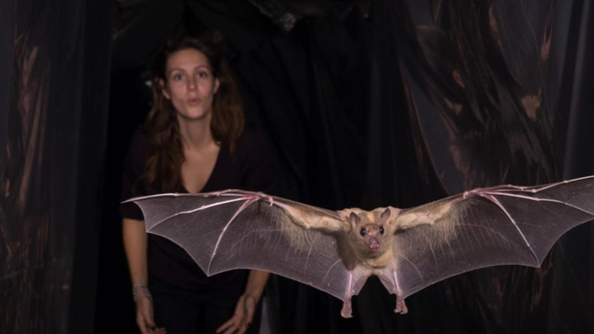 身為幾百種病毒的宿主 蝙蝠為何百毒不侵?