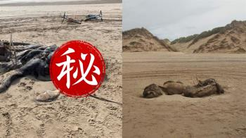 悚!海灘驚見非地球生物?「長毛+魚鰭」遺體腐爛發屍臭