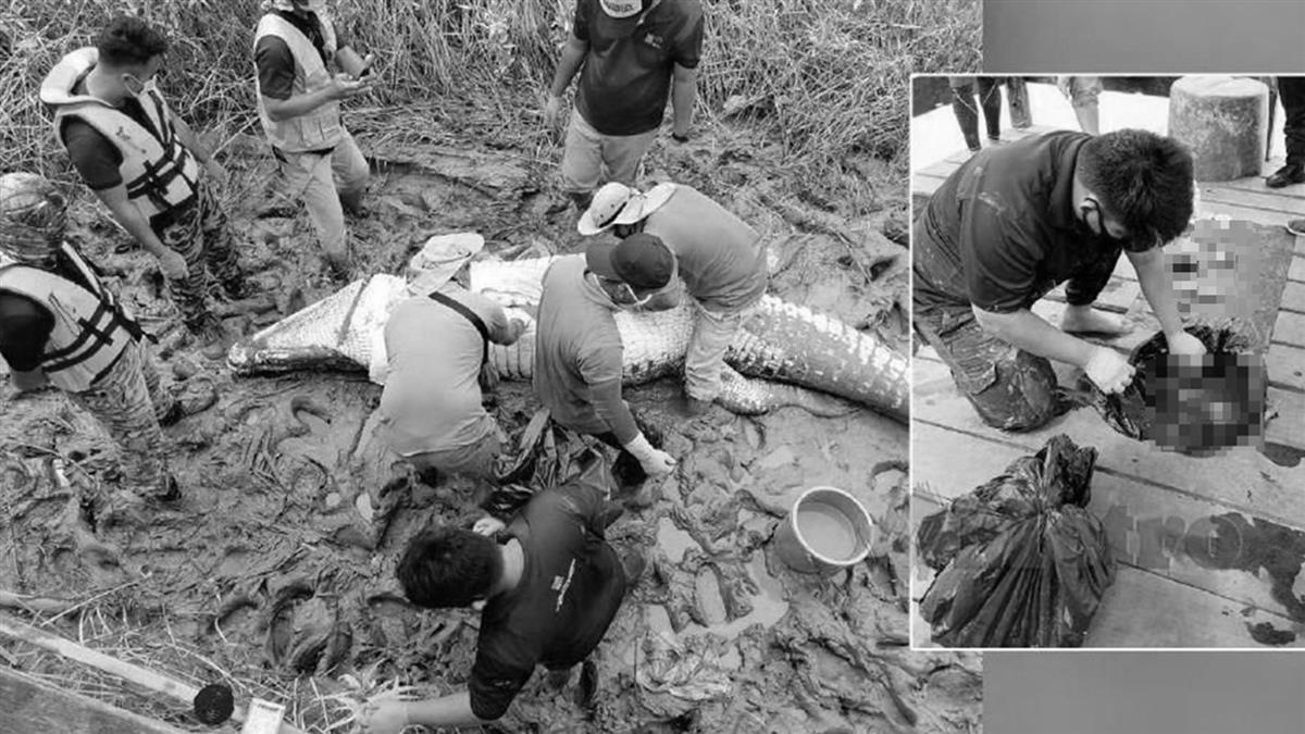 14歲少年撿螺 遭4公尺巨鱷拖進水...剖肚剩一堆碎骨
