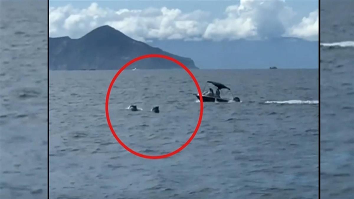 離譜!衝鋒艇直衝瓶鼻海豚 賞鯨團遊客:太惡劣