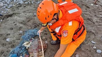 廢棄漁網奪命 花蓮綠蠵龜遭纏繞死在岸邊