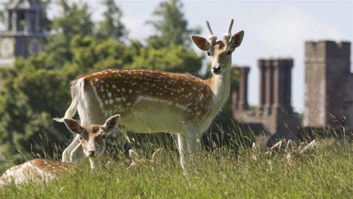 母女餵鹿吃紅蘿蔔 牠5分鐘後被管理員槍斃了