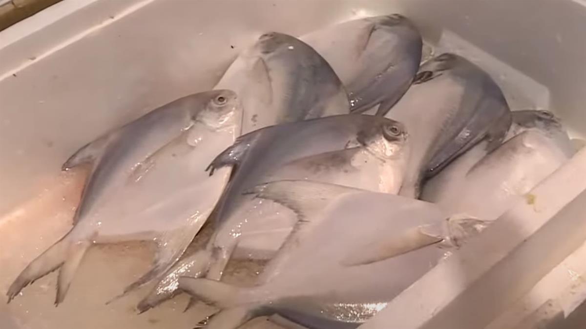 能源轉型換來黑道打壓?漁民怒批:20年後恐沒烏魚、白鯧