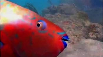 疫情下誕生的新網紅:美國邁亞密的魚