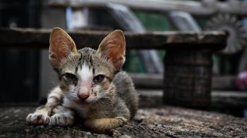 涉虐待30隻貓狗致死還詐財 狠男被爆騎車自撞身亡