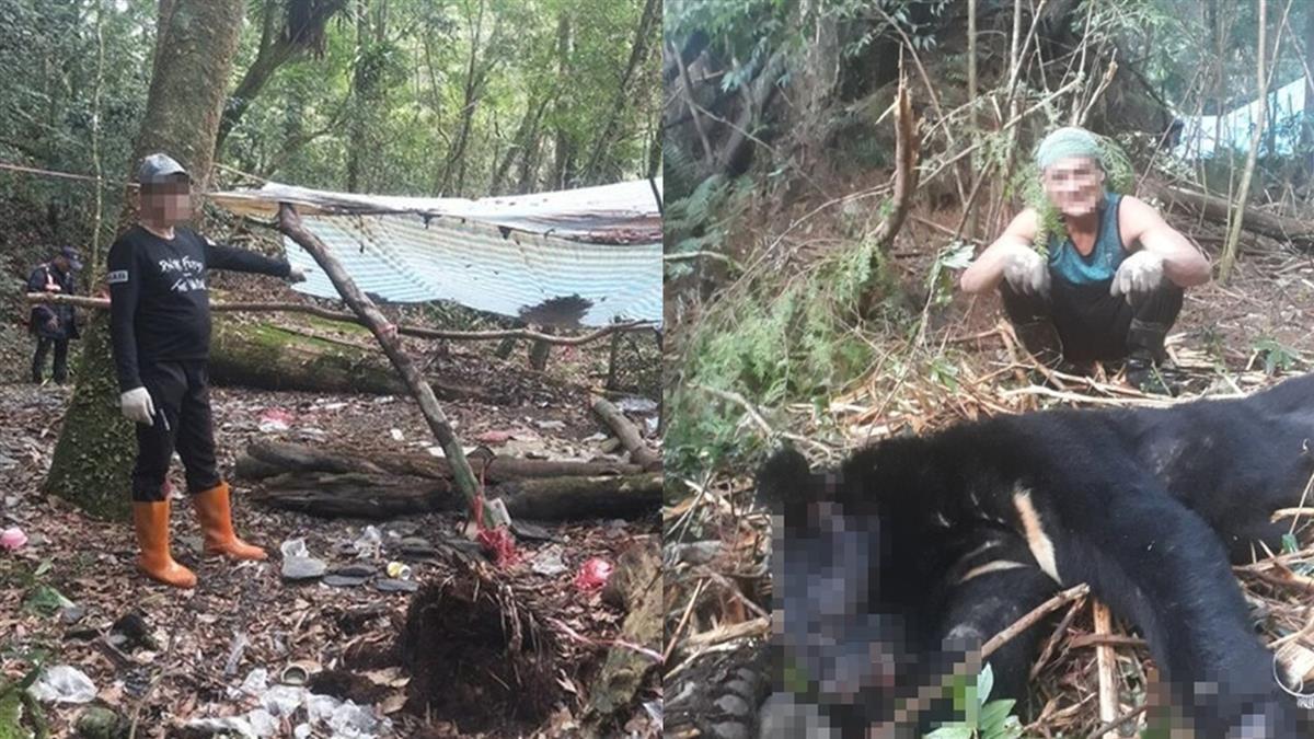 超離譜!新竹山老鼠盜伐千年樹 還吃掉台灣黑熊