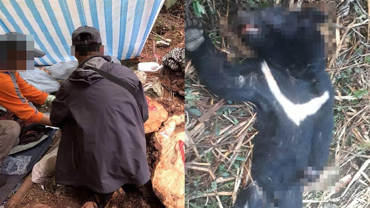 不只台灣黑熊!保育類山羊也遭山老鼠毒手 15人遭起訴