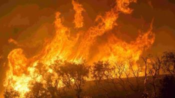 森林大火像「移動核能電廠」 紀錄片揭人類因應法則