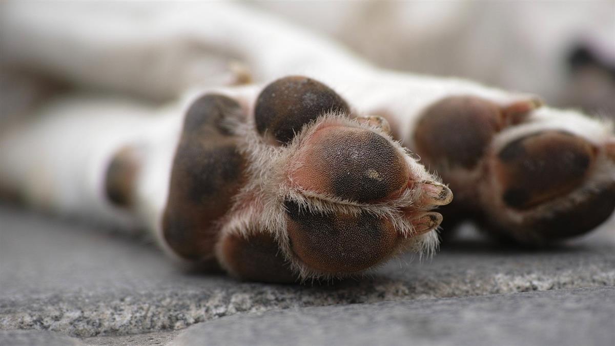 女租客提早落跑 留2犬致死違動保法判拘役50天