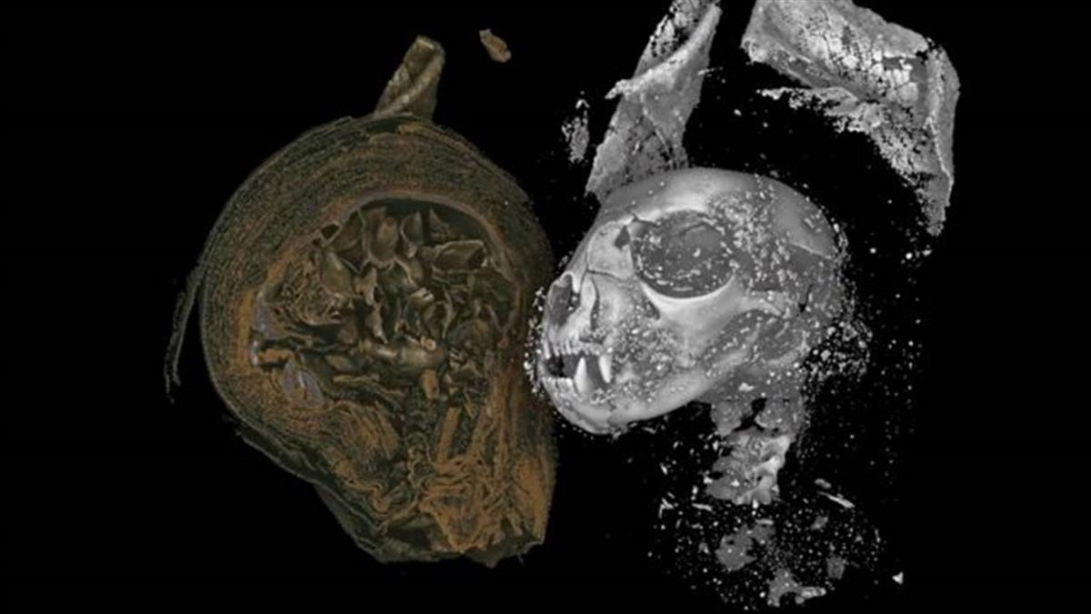 揭秘埃及動物木乃伊:高清3D掃描為你探察木乃伊體內