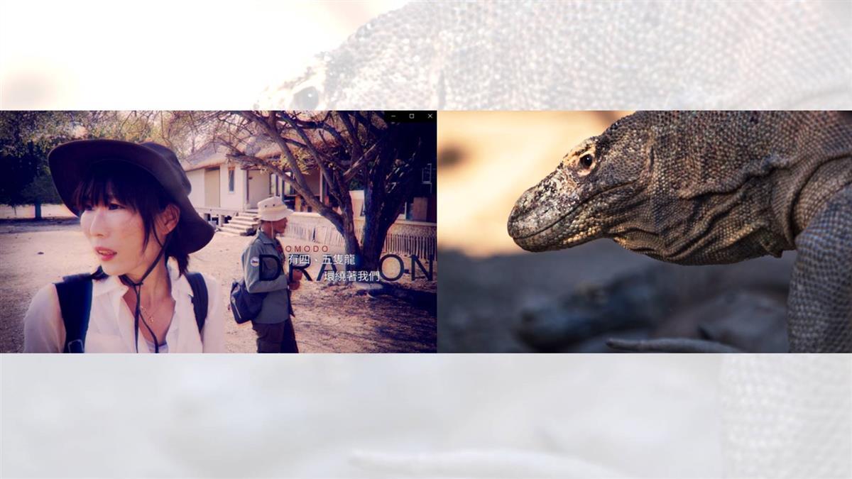 尋龍記!舒夢蘭勇闖龍穴 紀錄瀕危傳奇的科摩多龍