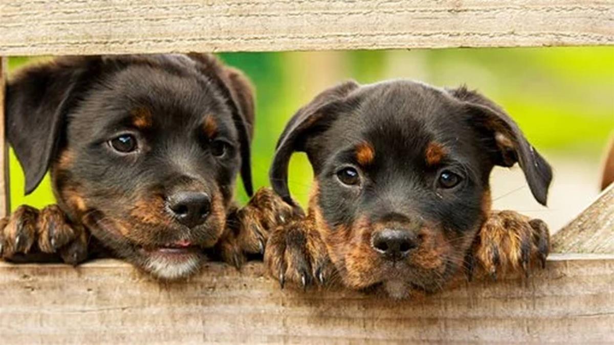 印尼人每年吃掉百萬隻狗 動保人士籲嚴格取締