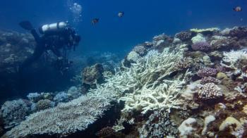 全台海域大規模珊瑚白化 環團:20年來最嚴重