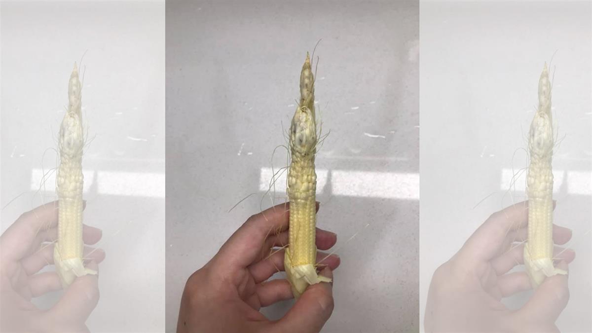 買到「肉瘤玉米筍」嚇壞想退貨!網友急勸阻:這是松茸等級
