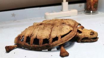 武漢學生隔8個月返回宿舍 寵物龜乾死剩骨骸