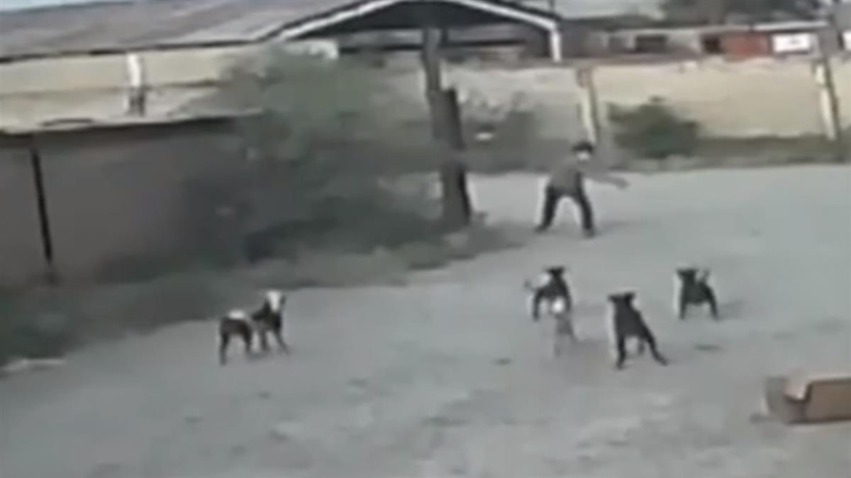 男遭6惡犬包圍!丟石嚇阻反遭飛撲撕咬 掙扎20秒慘亡