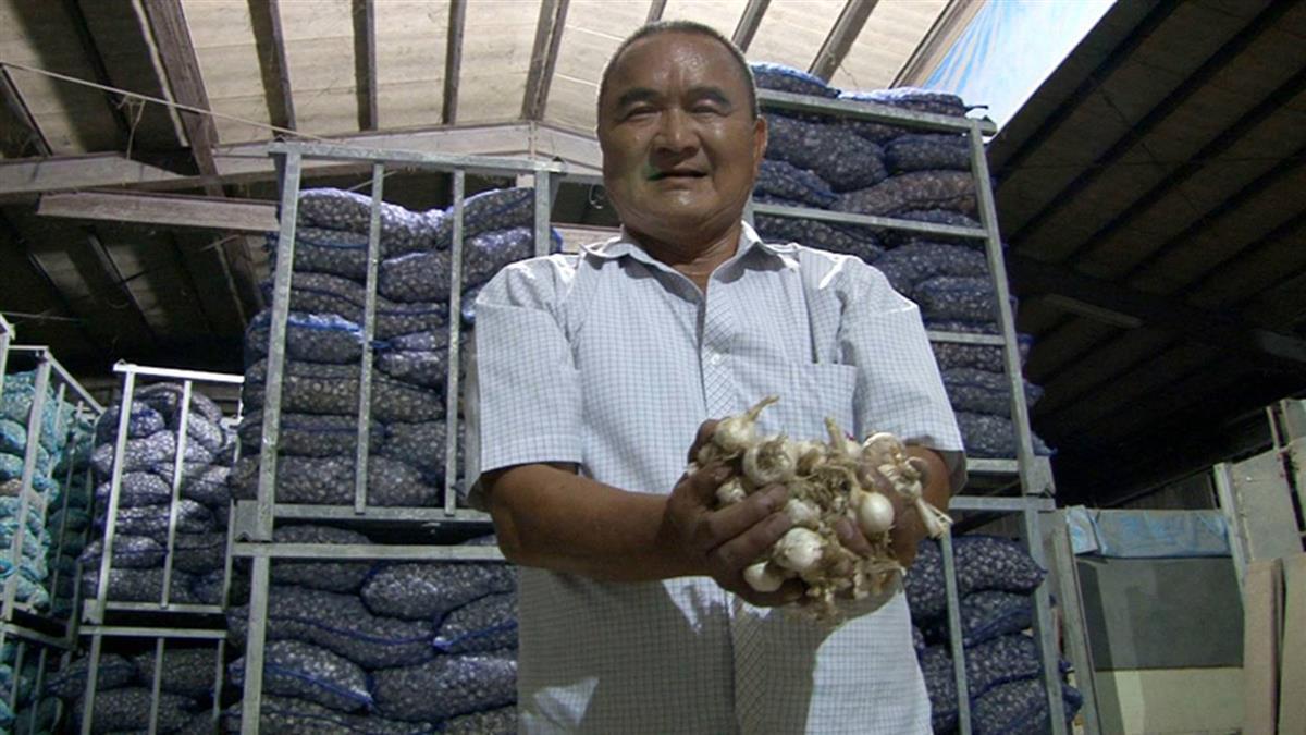 40公噸蒜頭遭訪查!  農會理事長澄清是蒜種:絕無囤積