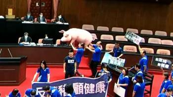 快訊/國民黨搬巨型毒豬衝議場!高喊反萊豬要公投