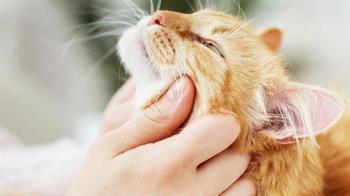 被寵物咬傷小腿引發蜂窩性組織炎 有這些症狀應先就醫