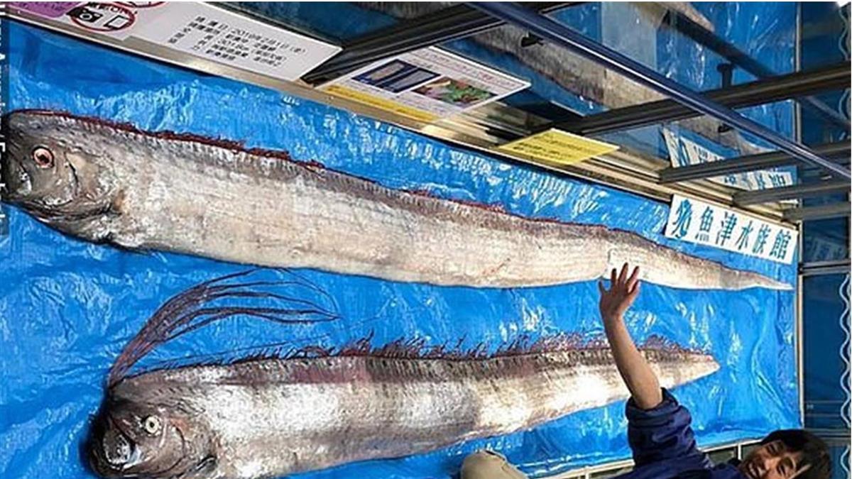 921大地震21周年!台東驚見3公尺地震魚 釣客嚇壞了