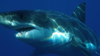 尪浮潛被巨鯊攻擊!海水一片鮮紅 孕妻跳海神救援