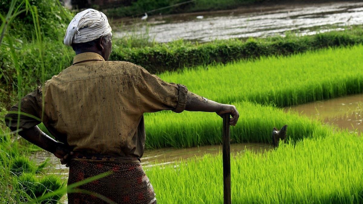 傻眼!印度農民農損10萬 政府只給1元補償金