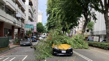 台中路樹突倒塌波及2車 幸無人傷