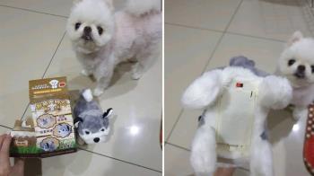 為了愛犬砸千元買「AI智能寵物」!他開箱傻眼:欺騙消費者