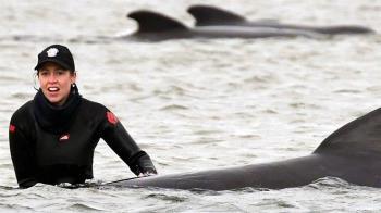領航鯨在澳洲附近擱淺 專家形容數量「有史以來最多」