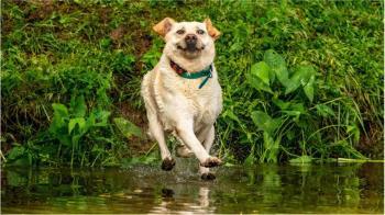 滑稽寵物攝影比賽:比比看誰最逗樂誰最萌