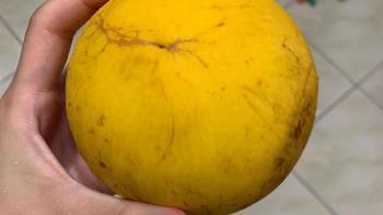 「謎之水果」上網求解 竟含滿滿膠原蛋白而且「超貴」