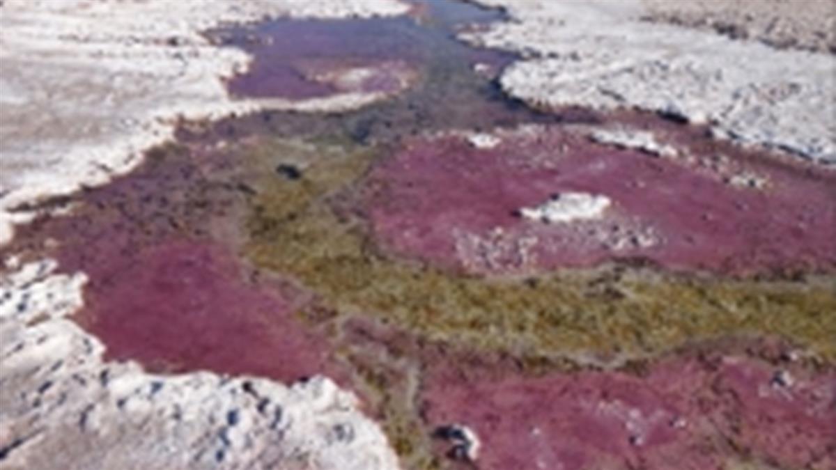 血色湖泊發現「吸毒生物」 已在地球存活35億年