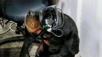 AR為狗狗「增強現實」:美軍研發軍犬用穿戴式裝置