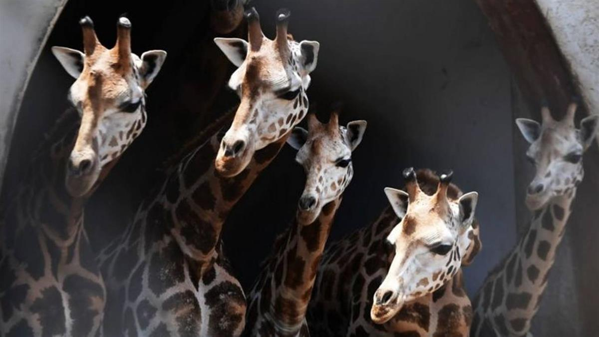 動物與數字:動物的數能力是天賦還是演化