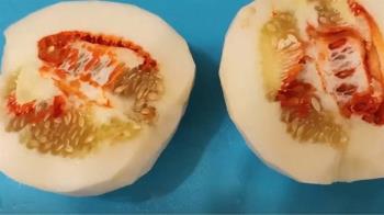香瓜剖開驚見「紅肉內出血」 民眾嚇問:能吃嗎!?