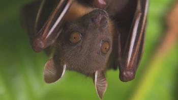 肺炎疫情:科學家稱新型冠狀病毒傳播不能怪罪蝙蝠