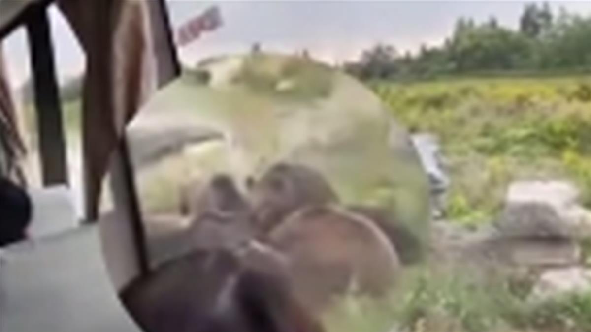 飼育員遭5熊撕咬分屍!園區血跡斑斑 目擊遊客哭喊:吃了