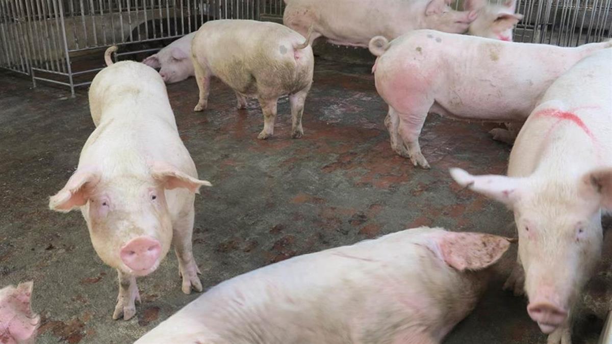 跨部會決議 財部:4理由不增列萊豬專屬貨號