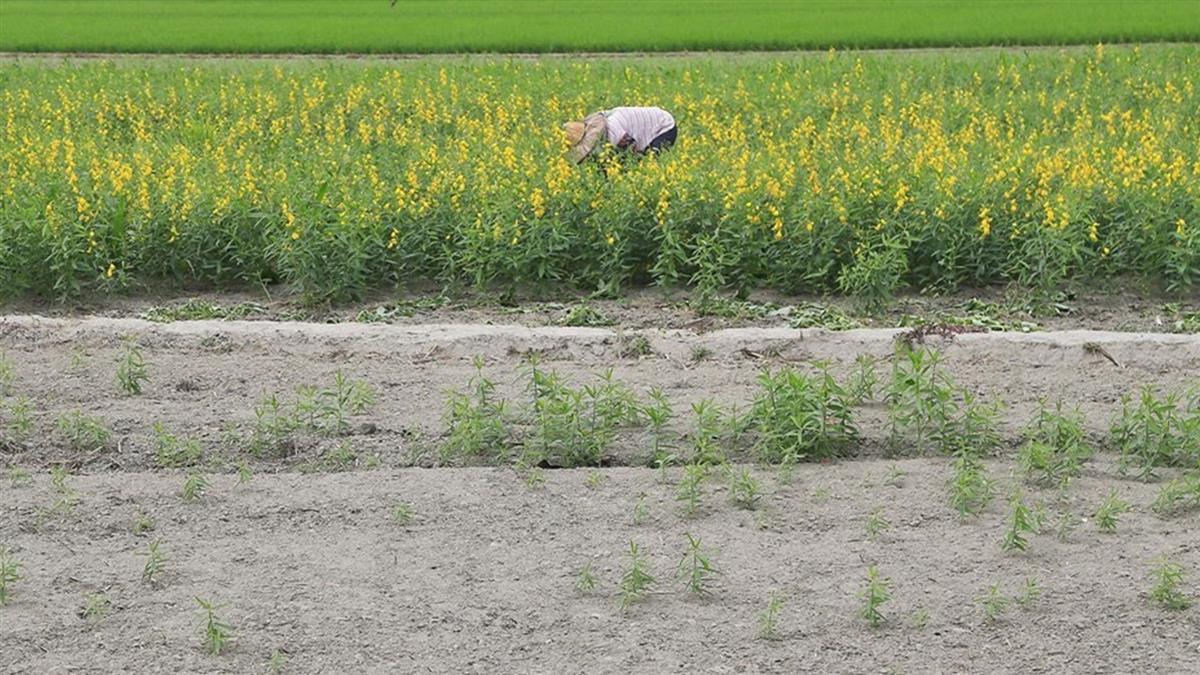 桃竹苗停灌非水稻作物補償  每公頃最高14萬元