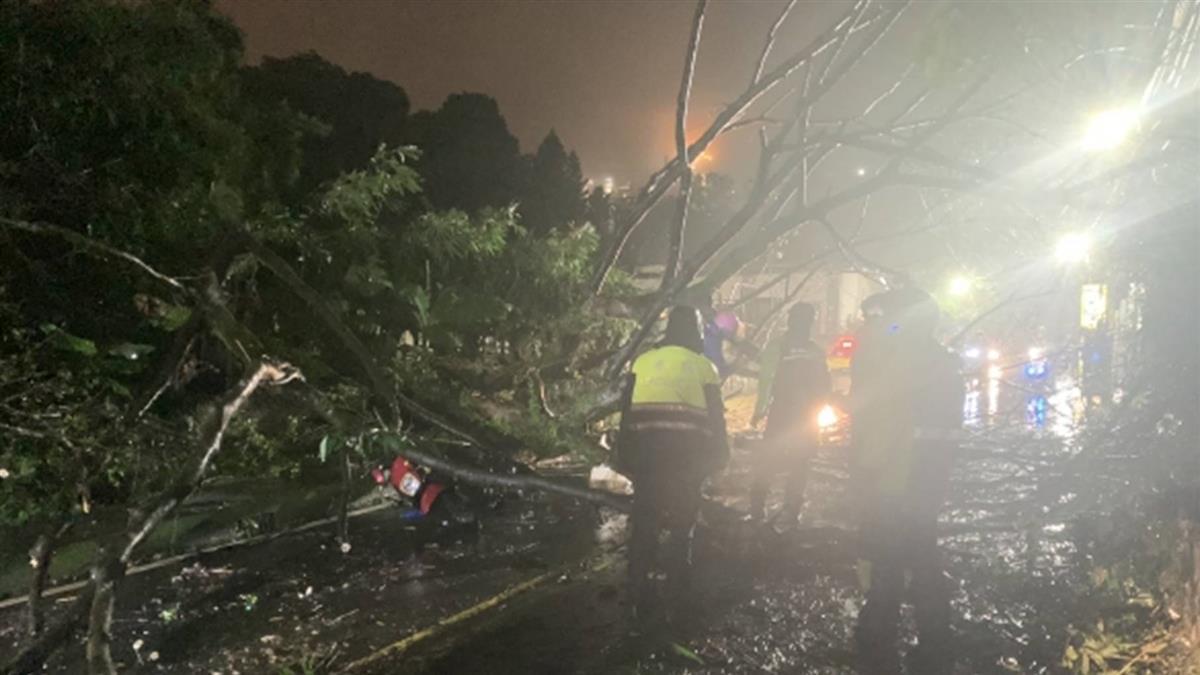 快訊/汐止路樹倒塌!30歲女騎士連人帶車倒地 送醫治療中