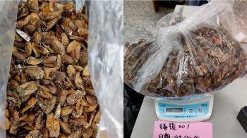 抓荔枝椿象賺外快! 彰化縣府開價每公斤千元收購
