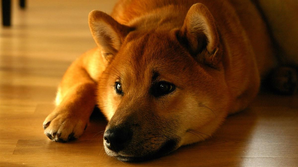 愛犬走失懸賞2萬!他驚見鄰居翁大嗑「紅肉」 化驗結果崩潰了