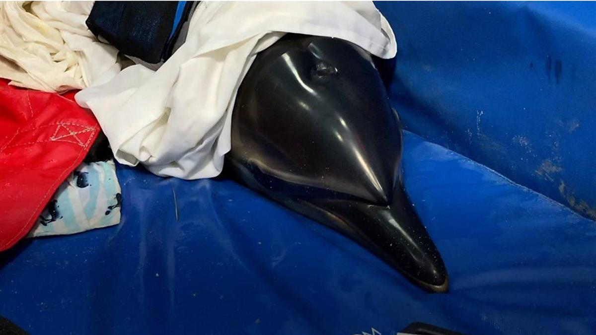 科技如何為擱淺的海豚帶來一條生路