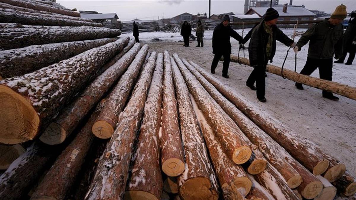 氣候變化:中國大陸植樹造林的碳吸收作用「被低估了」