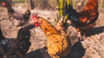 英國爆發H5N8禽流感 禽肉、活禽鳥及種蛋禁止輸台