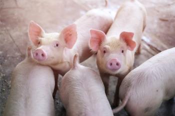 瘦肉精是什麼?營養師帶你快速了解瘦肉精的機制與風險!