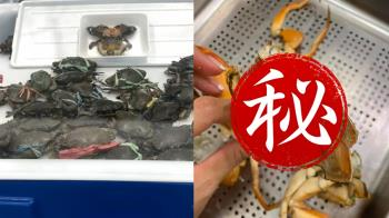 好市多螃蟹驚見「綠色蟹膏」! 營養師警告不要吃:恐有毒